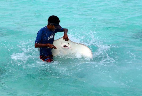 Смешная, но серьезная опасность на Мальдивах. И нет, это не акулы!