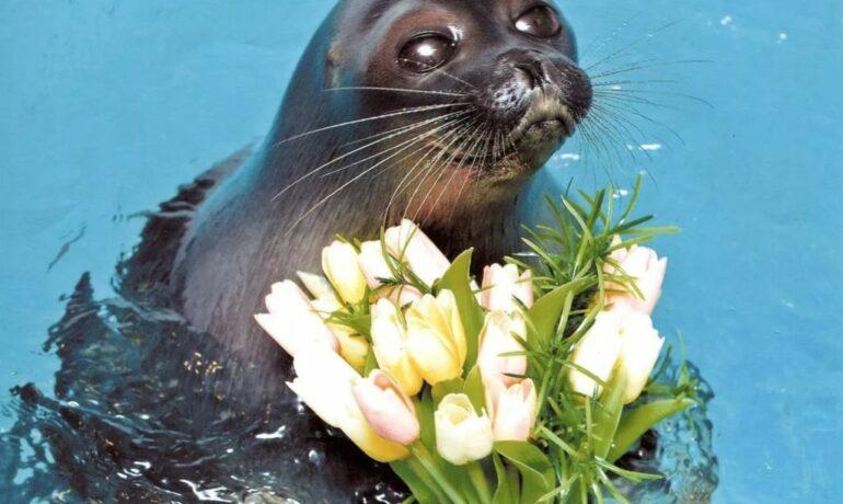 Иркутский нерпинарий: аквариум байкальской нерпы