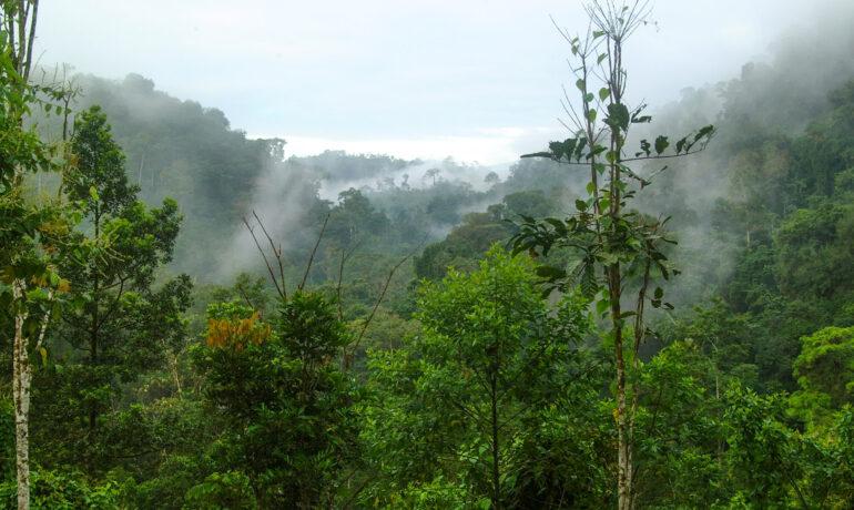 Туры в Карилло, Коста-Рика: советы туристам