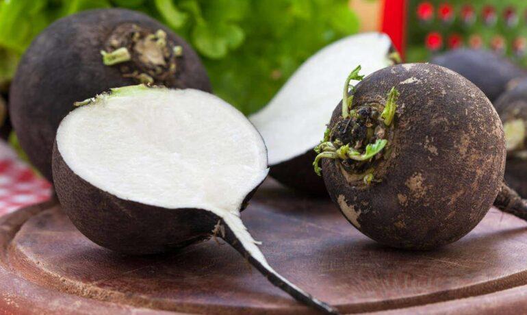 Редька. Зеленый корнеплод молодости и здоровья