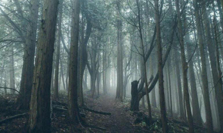 Тайны японского леса самоубийц у подножия горы Фудзи