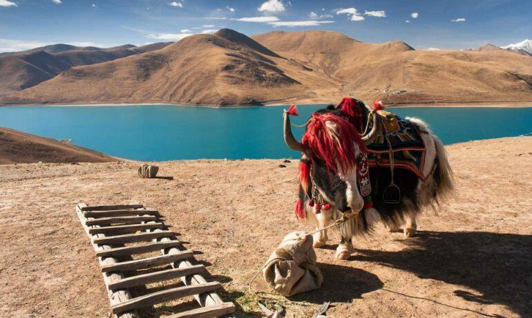 Увлекательное путешествие в Тибет: дворец «Потала» в Лхасе