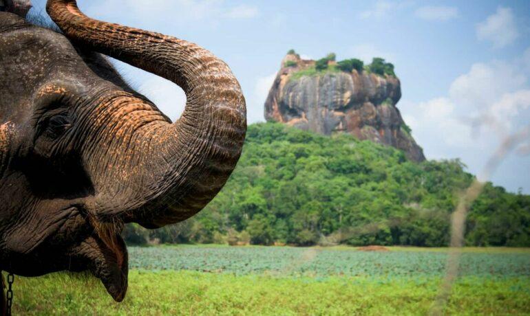 15 причин посетить Шри-Ланку