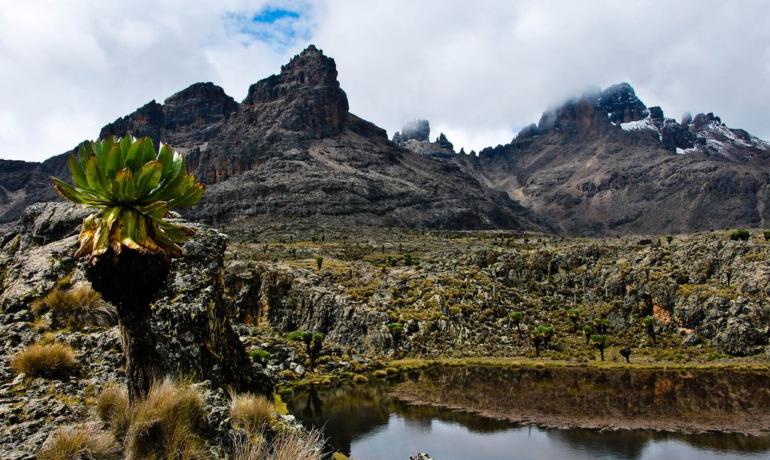 Природный лес горы Кения