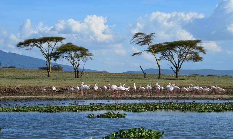 Система озер в Великой рифтовой долине, Кения