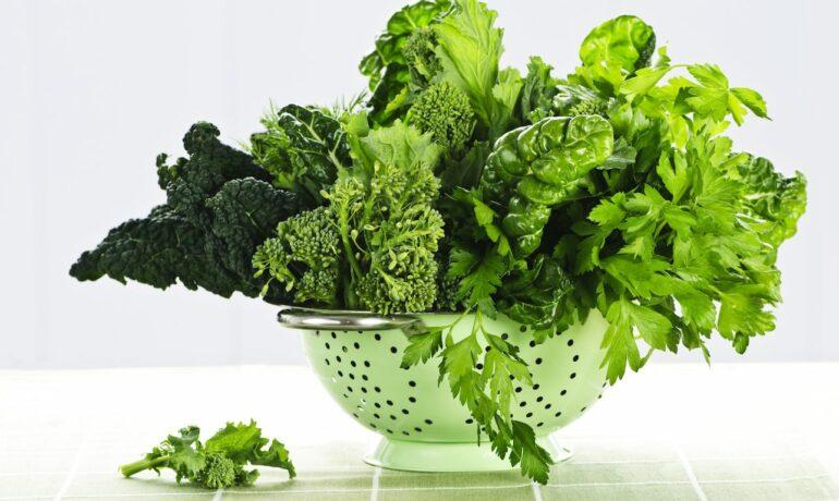 Хлорофилл, или энергия солнца заключённая в зелёный краситель
