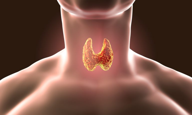 Щитовидная железа: почему так важно следить за щитовидной железой