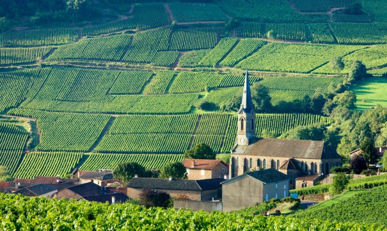 Климат и виноградники Бургундии, Франция
