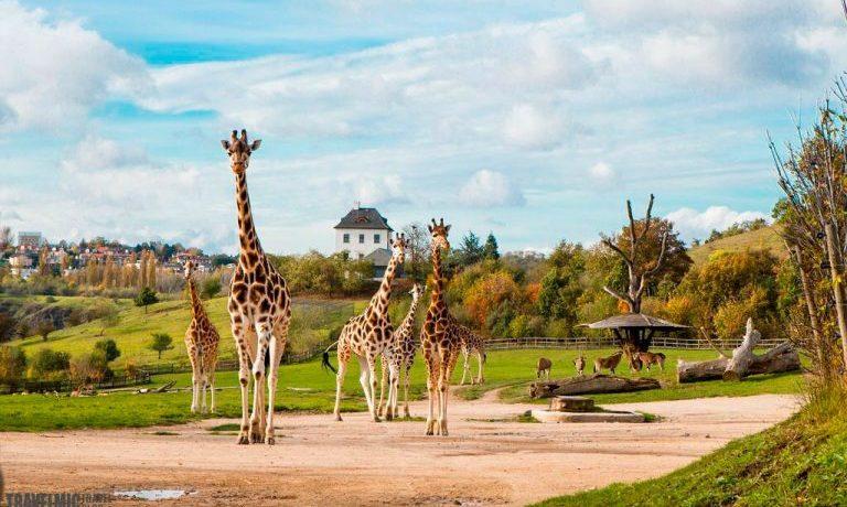 Пражский зоопарк, Чехия: 10 советов, которые пригодятся при посещении