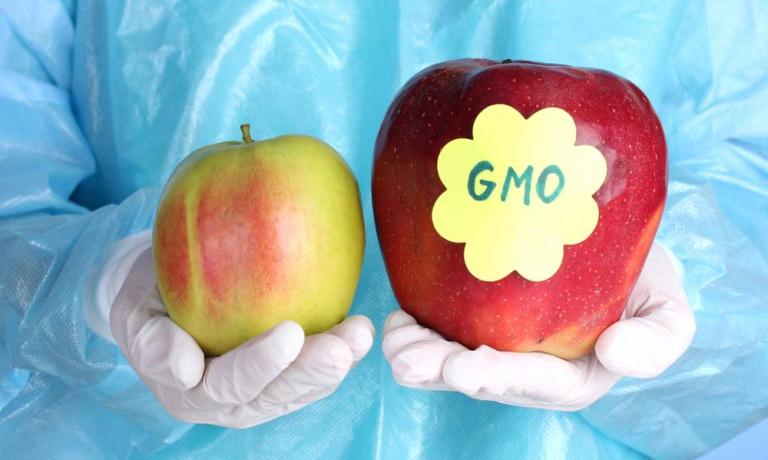 Генетически модифицированная еда - это вредно?