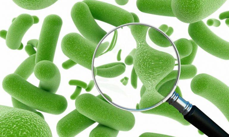Пробиотики и пребиотики: зачем нужны бактерии?