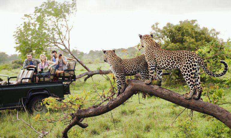 В мире животных: ТОП-7 незабываемых впечатлений от дикой природы