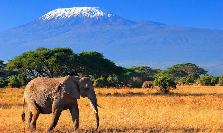Откройте для себя Кению