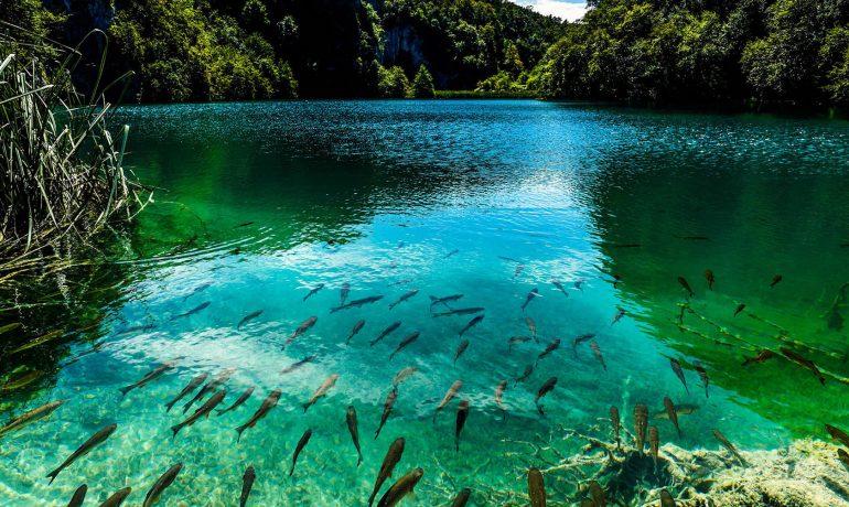 Плитвицкие озера - уникальное место Хорватии