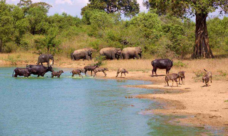 Национальный парк Удавалаве. Туристические маршруты Шри-Ланки