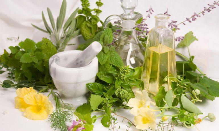 Лекарственные растения при кожных заболеваниях