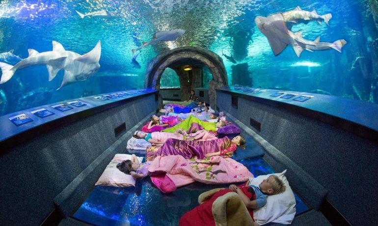 9 лучших аквариумов для посещения в США