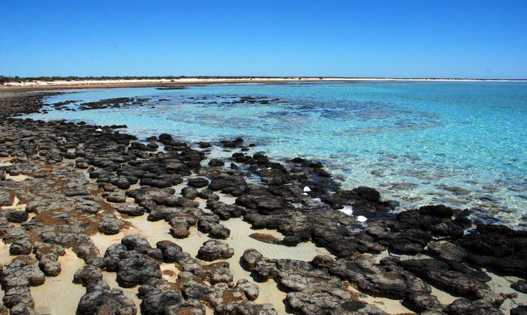 Залив Шарк-Бей в Австралии - уникальная экосистема