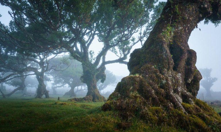 Лавровые леса Мадейры, Португалия