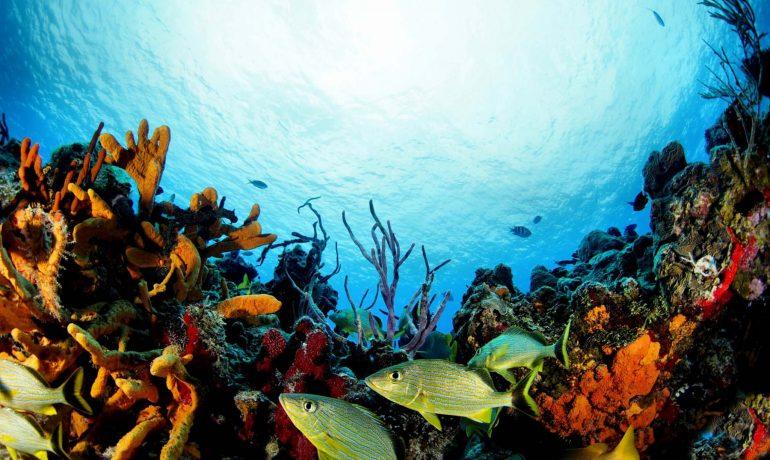 Откройте для себя секреты подводного мира: самые красивые места для дайвинга