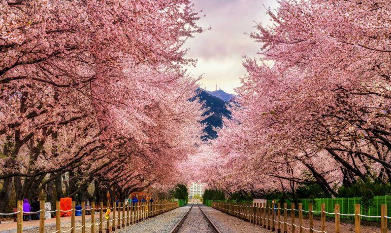 О жизни в Южной Корее и о чём забывают говорить туроператоры