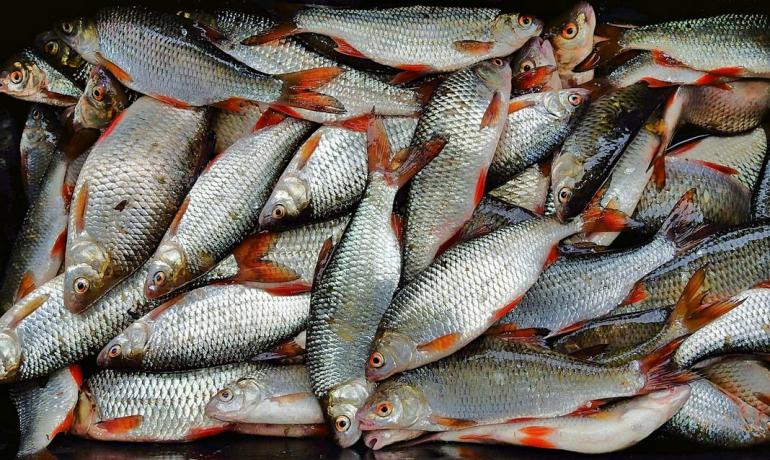 """Ловля рыбы на """"дорожку"""""""