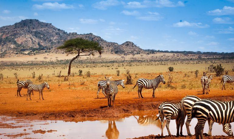 Первозданная Африка: ТОП-6 самых популярных достопримечательностей Танзании