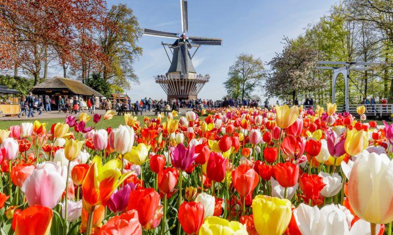 Кёкенхоф, Нидерланды: вся информация о парке тюльпанов