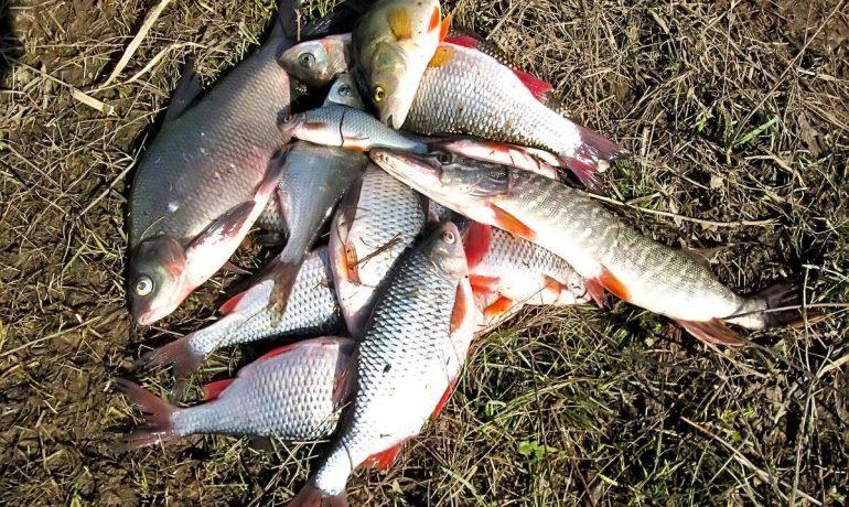 """Ловля """"летней"""" рыбы в несезонное время года"""